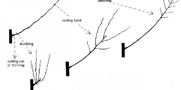 Pruning 4 cuts